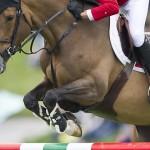 Как обеспечить правильный уход, если лошадь сломала ногу