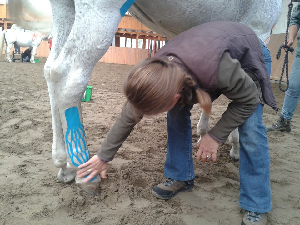 vetkintape-horse-leg