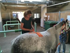 тейпирование спины лошади