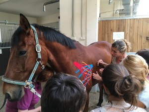 учимся тейпировать лошадь