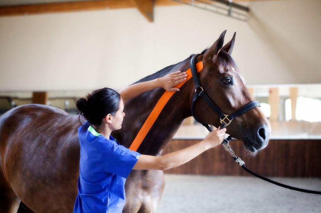 тейпирование лошадей