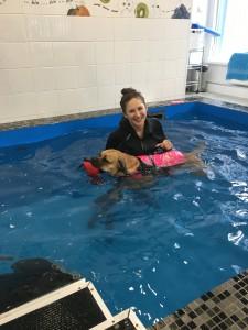 методы реабилитации собак в воде