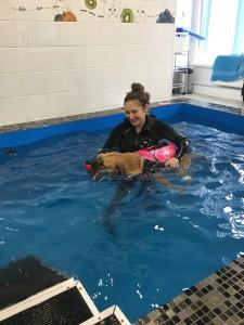 реабилитация собак в воде