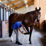 Хромота у лошадей: причины и лечение