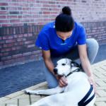 Круглый стол по теме «Кинезиотейпирование и его возможности в реабилитации и терапии мелких животных (на примере собак)» 29 мая 2016