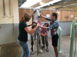 кинезиотейпирование лошадки
