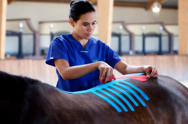 ветеринарное тейпирование лошади