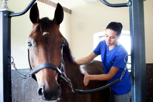 Лечение травм лошадей
